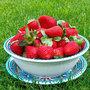 Fruittest met  bord blauw